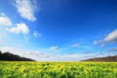 Cielo blu grandangolare orizzontale con il prato del fiore Fotografia Stock Libera da Diritti