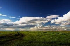 Cielo blu luminoso con erba verde fertile Immagini Stock Libere da Diritti
