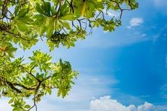 Cielo blu - Maldive Fotografia Stock Libera da Diritti