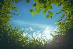 Cielo blu nell'alone degli alberi Fotografia Stock