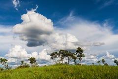Cielo blu nella sosta nazionale della Tailandia Fotografie Stock Libere da Diritti