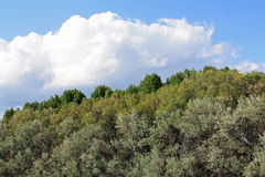 Cielo blu, nuvole, alberi Fotografia Stock Libera da Diritti
