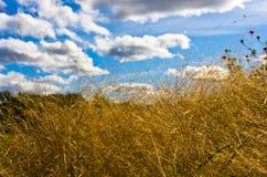Cielo blu nuvoloso immagini stock libere da diritti