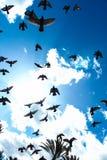 Cielo blu pieno di volata degli uccelli immagine stock