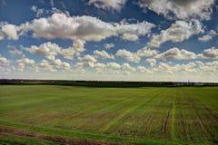 cielo blu scuro e campo giallo di autunno Fotografie Stock
