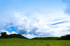 Cielo blu selvaggio sopra gli alberi gialli di verde del campo tutto lo sguardo come paesaggio variopinto, paesaggio della radura Fotografie Stock