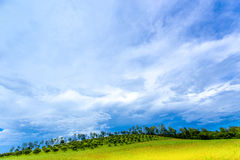 Cielo blu selvaggio sopra gli alberi gialli di verde del campo tutto lo sguardo come paesaggio variopinto, paesaggio della radura Immagini Stock