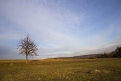Cielo blu, un albero in mezzo ai campi falciati e foresta in Immagine Stock