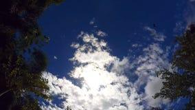 Cielo brillante, tropical, en el marco del abejón imágenes de archivo libres de regalías
