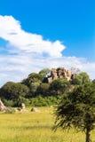 Cielo brillantemente azul y nubes Sabana de Serengeti Foto de archivo