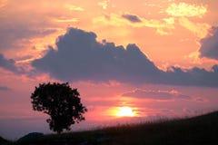Cielo colorido del agaist del árbol de la silueta con las nubes en la puesta del sol foto de archivo
