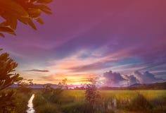 Cielo colorido sobre campo del arroz fotos de archivo libres de regalías