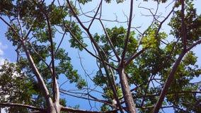 Cielo con el árbol Fotografía de archivo libre de regalías