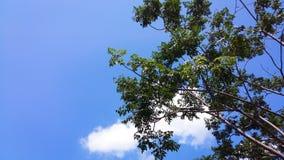 Cielo con el árbol Imagen de archivo libre de regalías