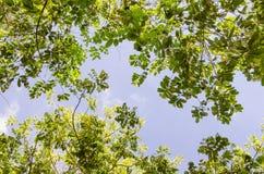 Cielo con el árbol Foto de archivo libre de regalías