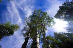 Cielo con el cerco de los árboles Imágenes de archivo libres de regalías