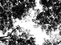 Cielo con gli alberi Fotografie Stock Libere da Diritti