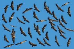 Cielo con gli uccelli Fotografia Stock Libera da Diritti