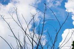 Cielo con il ramo Fotografia Stock Libera da Diritti