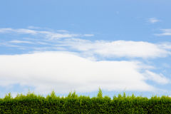 Cielo con la barriera verde Fotografia Stock