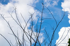 Cielo con la rama foto de archivo libre de regalías