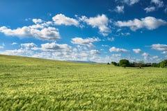 Cielo con las nubes sobre un campo de trigo Imagen de archivo