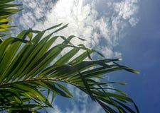 Cielo con le nubi immagine stock libera da diritti