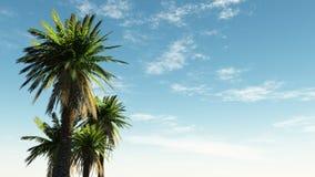 Cielo con le palme Fotografia Stock Libera da Diritti