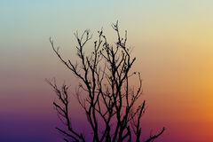 Cielo crepuscolare variopinto dell'albero morto della siluetta Fotografie Stock