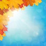Cielo d'angolo del sole delle foglie di acero realistiche Fotografie Stock
