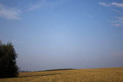 Cielo de Тhe sobre un campo de la avena Fotografía de archivo libre de regalías