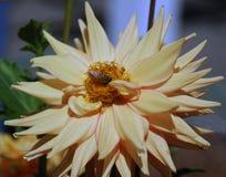 Cielo de la abeja Fotos de archivo