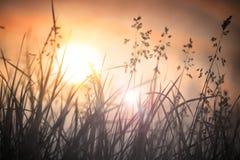 Cielo de la hierba seca en la puesta del sol Imagen de archivo libre de regalías