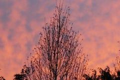 Cielo de la mañana Fotos de archivo