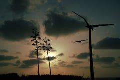 Cielo de la madrugada Imágenes de archivo libres de regalías