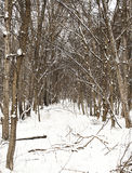 Cielo de la nieve Imagen de archivo