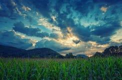 Cielo de la nube en campo de grano Imágenes de archivo libres de regalías