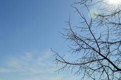 Cielo de la primavera Fotos de archivo libres de regalías