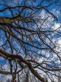 Cielo de la primavera Fotografía de archivo libre de regalías