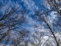 Cielo de la primavera Imagen de archivo libre de regalías
