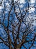 Cielo de la primavera Imagenes de archivo