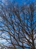 Cielo de la primavera Fotografía de archivo