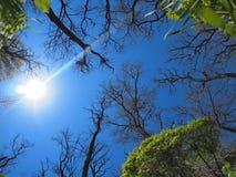 Cielo de la primavera - visión de debajo Fotos de archivo