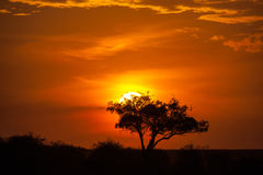 Cielo de la puesta del sol Fotografía de archivo libre de regalías