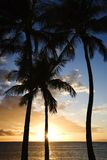 Cielo de la puesta del sol enmarcado por las palmas. Imagen de archivo libre de regalías
