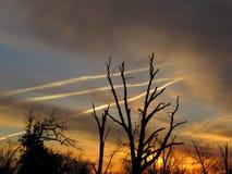 Cielo de la puesta del sol, 3 Jet Trails brillante y silueta de los árboles Imagen de archivo libre de regalías