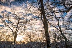 Cielo de la puesta del sol a través de los árboles Foto de archivo libre de regalías