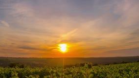 Cielo de la salida del sol sobre un campo de girasoles metrajes