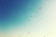 Cielo de la vainilla Imagen de archivo