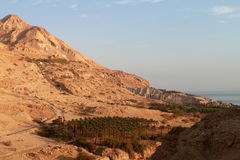 Cielo de las palmas de la montaña Foto de archivo
